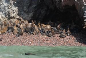 Seals' Maternity