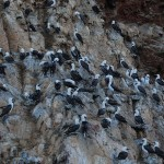 Day 8. Islas Ballestas and Paracas Nature Reserve